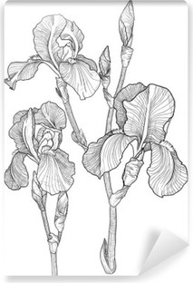 Carta da Parati in Vinile Schizzo di mazzo di iris in fiore