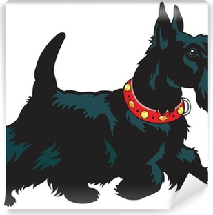 Carta da Parati in Vinile Scottish terrier