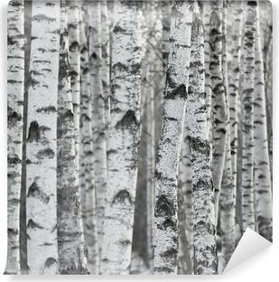 Carta da Parati in Vinile Sfondo di inverno Betulla Foresta