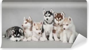 Carta da Parati in Vinile Siberian Husky cucciolo di cane