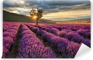 Carta da Parati in Vinile Stunning paesaggio con campo di lavanda al sorgere del sole