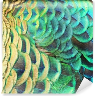 Carta da Parati in Vinile Verde piume di pavone