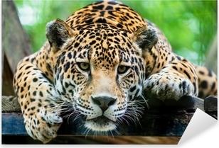 Çıkartması Pixerstick Güney Amerika jaguar