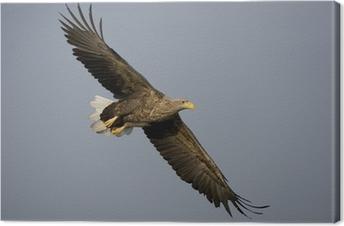 Cuadro en Lienzo Águila Blanco-atada