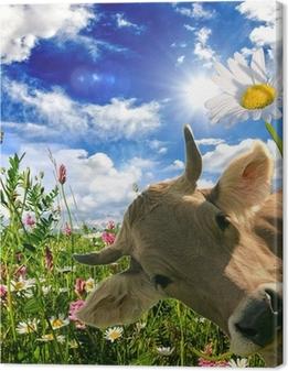 Cuadro en Lienzo Alles Liebe zum Geburtstag: Kuh schenkt Eine Blume :)