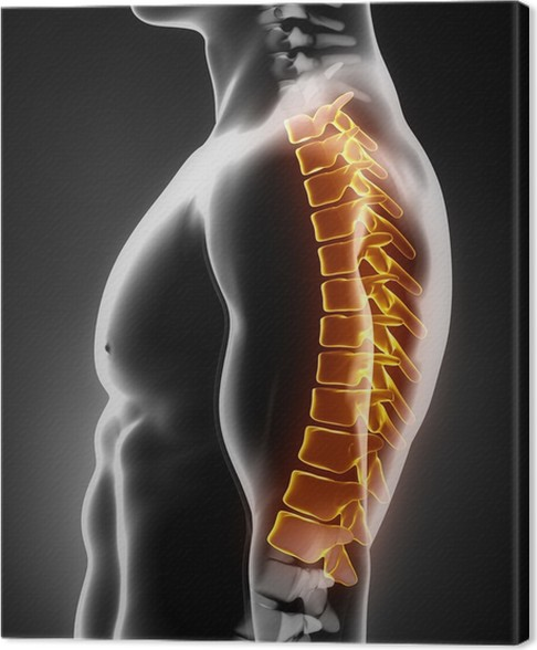 Cuadro en Lienzo Anatomía de la columna torácica lateral izquierda ...
