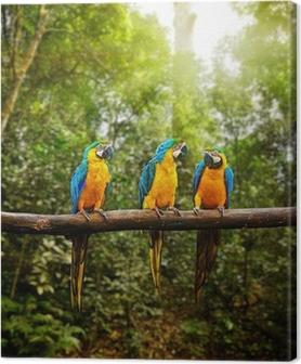 Cuadro en Lienzo Ararauna azul y amarillo Guacamayo Ara en el bosque
