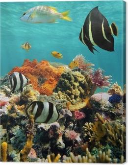 Cuadro en Lienzo Arrecifes de coral y peces tropicales en la superficie del agua