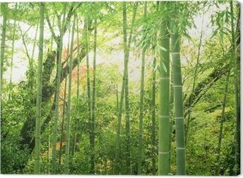 Cuadro en Lienzo Bamboo