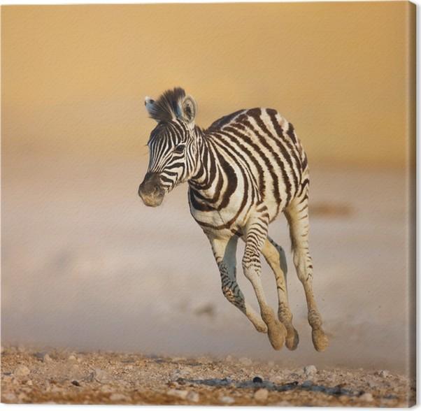 Cuadro en Lienzo Bebé cebra corriendo • Pixers® - Vivimos para cambiar