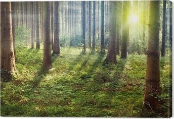 Cuadro en Lienzo Bosque de la puesta del sol