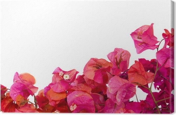 Cuadro en Lienzo Buganvillas flores marco • Pixers® - Vivimos para ...