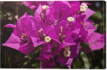 Cuadro en Lienzo Buganvillas flores