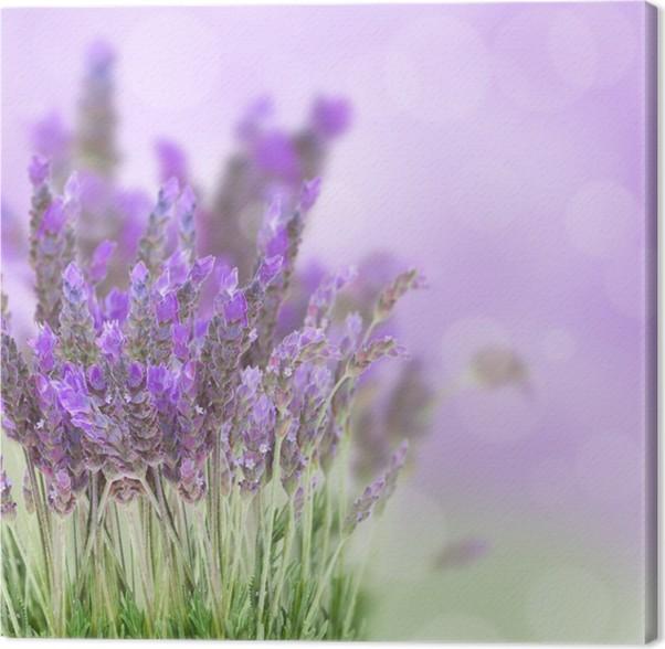 Cuadro en Lienzo Campo de flores de lavanda • Pixers® - Vivimos para ...