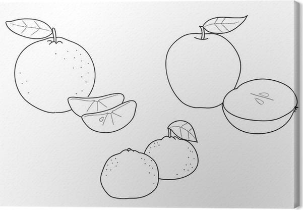 Cuadro en Lienzo Colorear Frutas: manzanas, clementinas y mandarinas ...