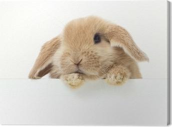 Cuadro en Lienzo Conejo lindo. Retrato de primer plano sobre un fondo blanco