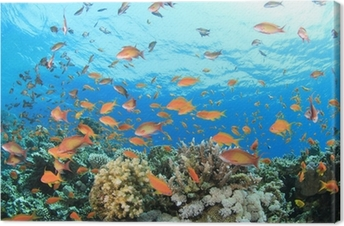 Cuadro en Lienzo Coral Reef Underwater