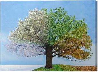 Cuadro en Lienzo Cuatro estaciones árbol