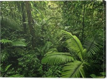 Cuadro en Lienzo Densa selva tropical