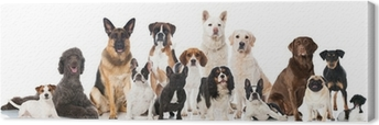 Cuadro en Lienzo Diferentes razas de perros