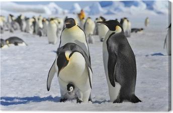 Cuadro en Lienzo Emperor penguin