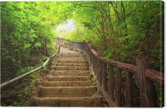 Cuadro en Lienzo Escalera al bosque, Kanchanburi, Tailandia