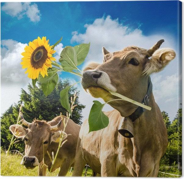 Cuadro en Lienzo Feliz cumpleaños / vaca con girasol • Pixers ...