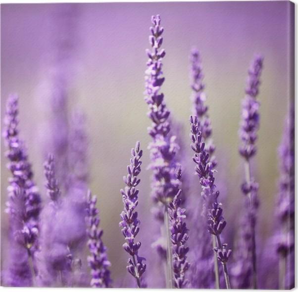 Cuadro en Lienzo Flor de Lavanda • Pixers® - Vivimos para cambiar