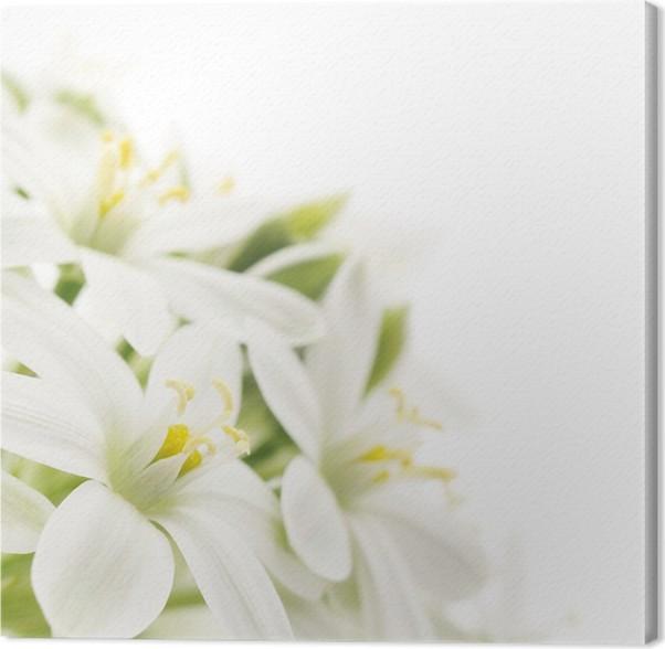Cuadro en Lienzo Flores blancas de fondo • Pixers® - Vivimos para ...