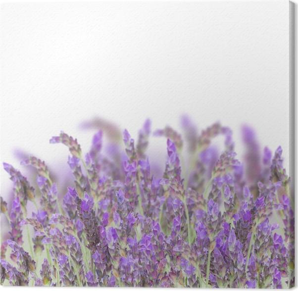 Cuadro en Lienzo Flores de lavanda en blanco • Pixers® - Vivimos ...