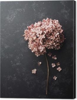 Cuadro en Lienzo Flores secadas del hydrangea en vista de negro superior de la mesa de la vendimia. estilo aplanada.
