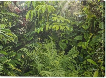 Cuadro en Lienzo Fondo verde selva tropical