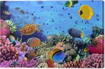 Cuadro en Lienzo Foto de una colonia de coral