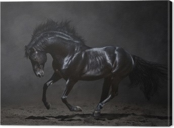 Cuadro en Lienzo Galopante caballo negro sobre fondo oscuro
