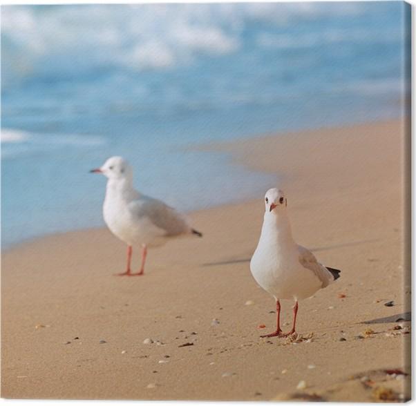 Cuadro en Lienzo Gaviotas, mar y playa de arena • Pixers® - Vivimos ...