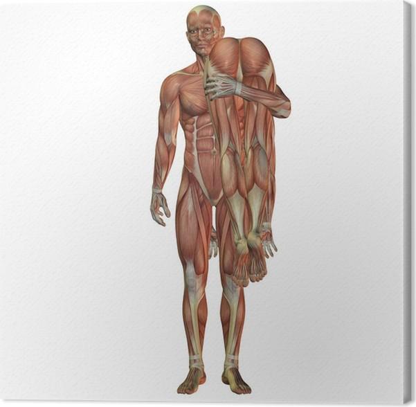 Excepcional Mapa De Los Músculos Humanos Ideas - Anatomía de Las ...