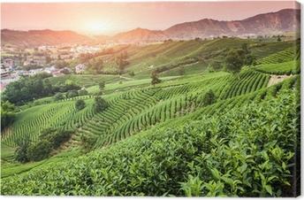 Cuadro en Lienzo Jardín de té verde en la colina, china