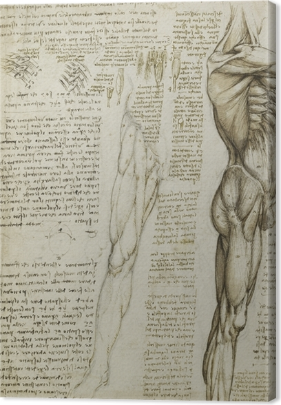 Cuadro en Lienzo Leonardo da Vinci - Estudio anatómico - Reproducciones