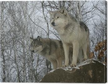 Cuadro en Lienzo Lobo gris, Canis lupus
