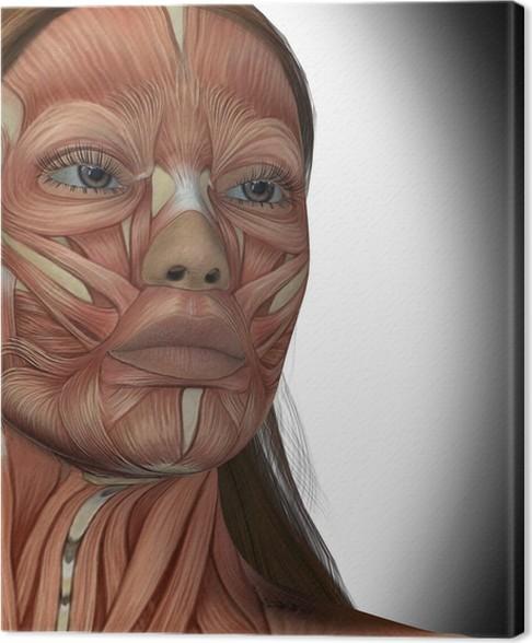Cuadro en Lienzo Los músculos faciales de una mujer • Pixers ...