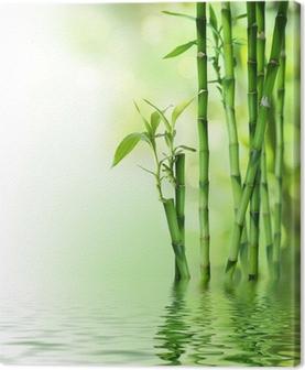 Cuadro en Lienzo Los tallos de bambú sobre el agua