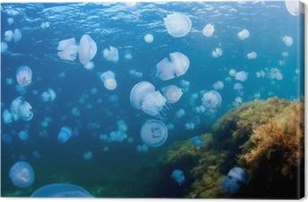 Cuadro en Lienzo Medusas (Rhizostoma pulmo), en el Mar Negro.