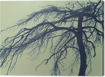 Cuadro en Lienzo Misterioso árbol, bosque de miedo