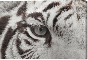 Cuadro en Lienzo Ojo de tigre blanco