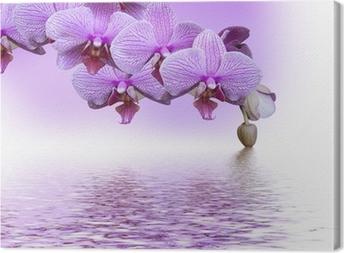 Cuadro en Lienzo Orquídea lila hermosa