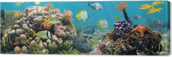 Cuadro en Lienzo Panorámica de arrecife