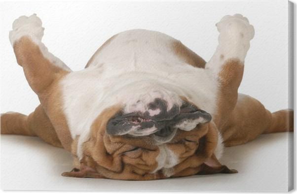 Cuadro En Lienzo Perro Durmiendo Pixers 174 Vivimos Para