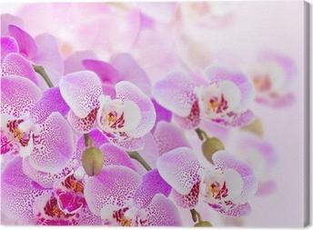 Cuadro en Lienzo Pink ramificación de la orquídea de cerca