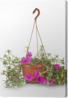 Cuadro en Lienzo Portulaca grandiflora