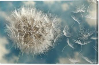 Cuadros en lienzo premium Las semillas de diente de león en el viento perder